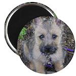 "Cairn Terrier ""Emma"" Magnet"