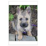 "Cairn Terrier ""Emma"" Large Poster"