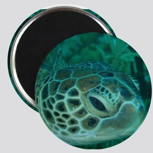 Green Turtle Magnet