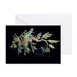 Fish Greeting Cards (20 Pack)