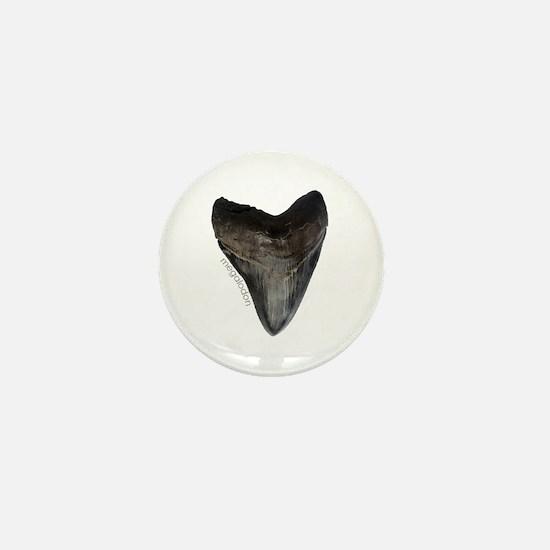 Megalodon Tooth Mini Button
