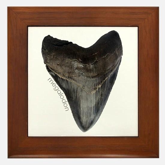 Megalodon Tooth Framed Tile