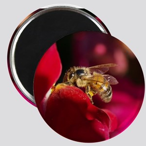 """""""Busy Bee No.2"""" Magnet"""