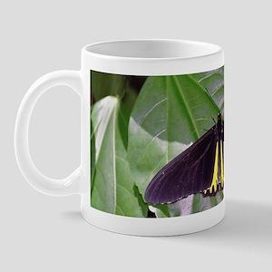 Common Birdwing Butterfly Mug