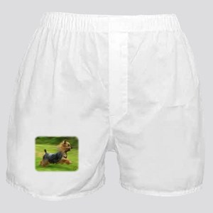Australian Silky Terrier 9B19D-03 Boxer Shorts