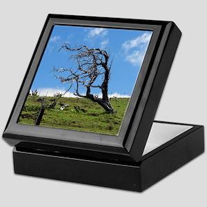 Windblown Tree Keepsake Box