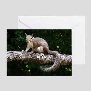 Showy Squirrel Greeting Card