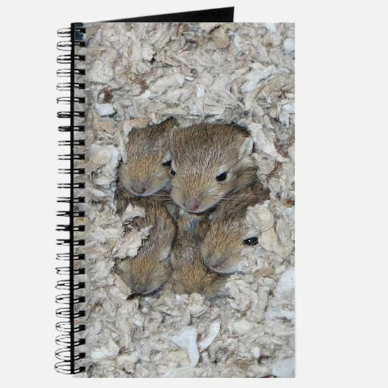 Gerbil pup journal