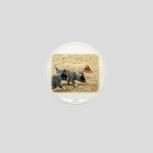 Australian Cattle Dog 8T57D-18 Mini Button