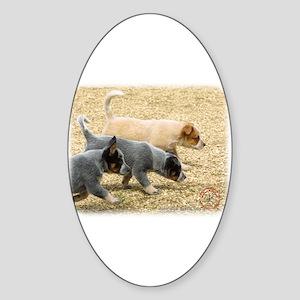 Australian Cattle Dog 8T57D-18 Sticker (Oval)