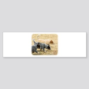 Australian Cattle Dog 8T57D-18 Sticker (Bumper)