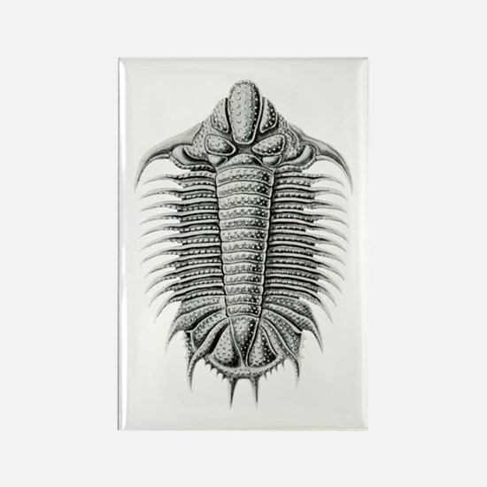 Trilobite Rectangle Magnet