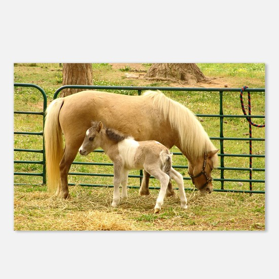 Horse Babies Postcards (Package of 8)