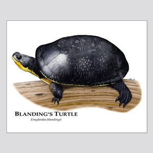 Blanding's Turtle Small Poster