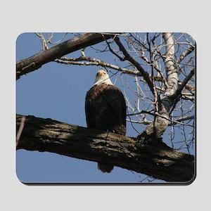 Bald Eagle in a Tree Mousepad