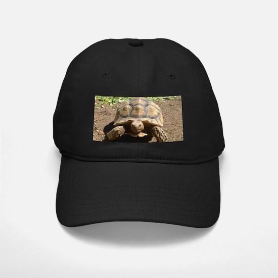 Tortoise Baseball Hat
