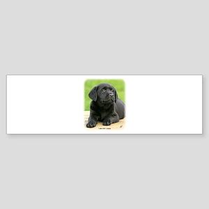 Labrador puppy 9Y267D-109 Sticker (Bumper)