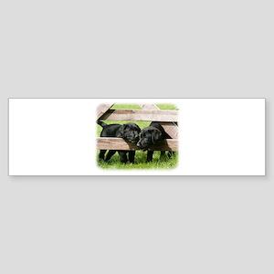 Labrador Pups 9Y415D-168 Sticker (Bumper)