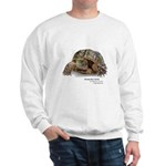 Ornate Box Turtle Sweatshirt