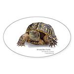 Ornate Box Turtle Oval Sticker (10 pk)