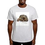 Ornate Box Turtle Light T-Shirt
