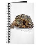 Ornate Box Turtle Journal