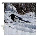 Black Billed Rocky Mountain Magpie Shower Curtain