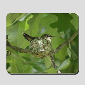 Hummingbird on a Nest Mousepad
