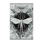 Moths 11x17 Print