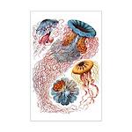 Medusae 11x17 Print