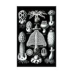 Fungi 11x17 Print