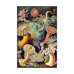 Sea Anemones 11x17 Print