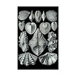 Seashells 11x17 Print