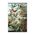 Hummingbirds 11x17 Print