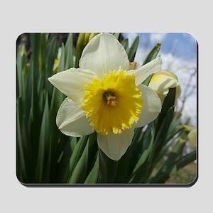 Yellow and White Daffodil Mousepad