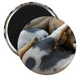 "Lotsa Spots 2.25"" Magnet (100 pack)"