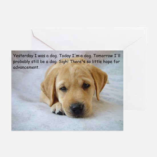 Yesterday I was a dog Greeting Cards (Pk of 10