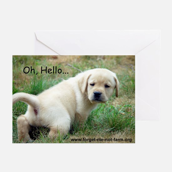 Oh, Hello... Greeting Cards (Pk of 10)