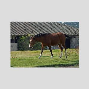 Ecuador horse Magnets