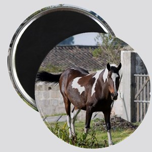 Painted horse Magnets