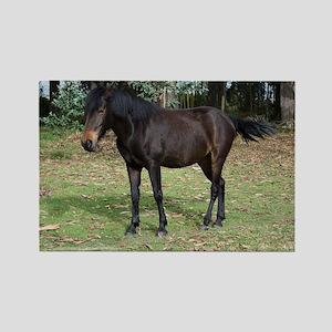 Dark bay horse Magnets