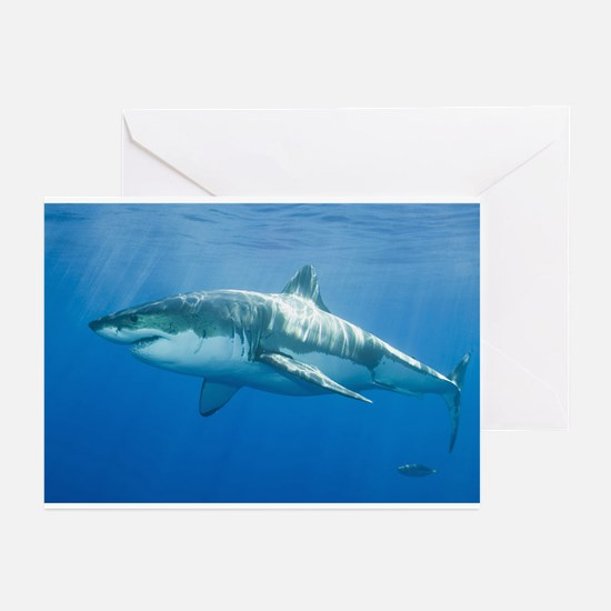 Great White Shark Greeting Cards (Pk of 20)