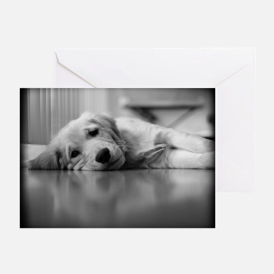 Pooped Golden Retriever Puppy Greeting Cards (Pack