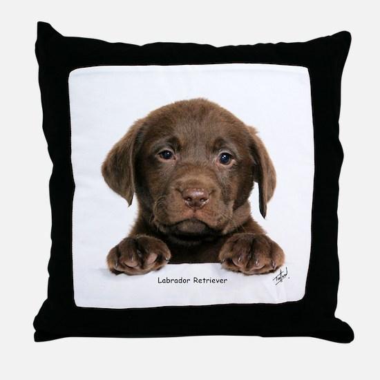 Chocolate Labrador Retriever puppy 9Y270D-050 Thro