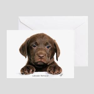 Chocolate Labrador Retriever Puppy 9Y270D 050 Gree