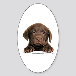 Chocolate Labrador Retriever puppy 9Y270D-050 Stic