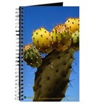 Nabeul Cactus Journal