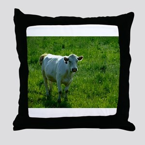 Charolais cow in field Throw Pillow