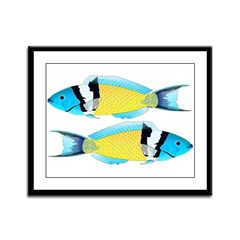 Bluehead Wrasse Framed Panel Print
