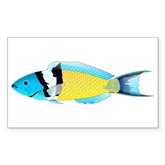 Bluehead Wrasse Decal
